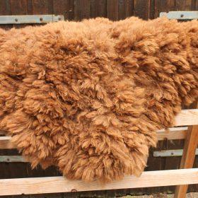 Donkerbruin alpacavachtje